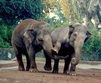 elefanti.jpg