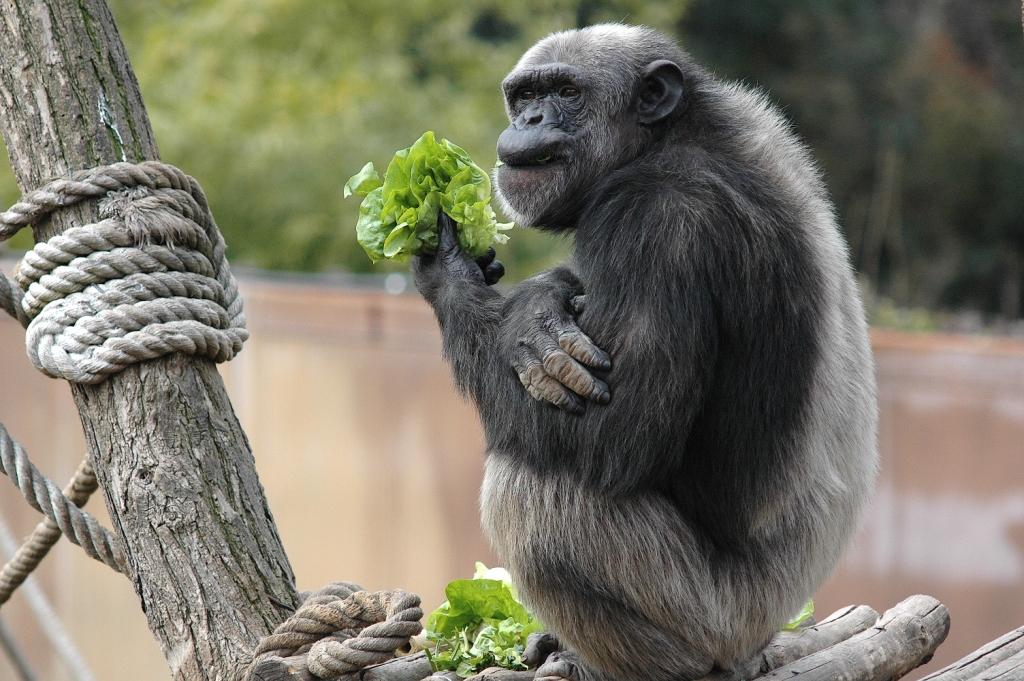 Pippo insalata.jpg